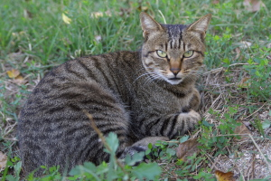 東部浄化センターの猫