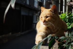 新撮・尾道の猫