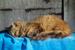 新撮・尾道の猫-2