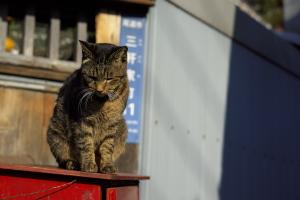 新春・尾道猫撮り