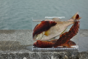 2月の魚たち