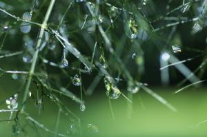 α7Digitalの雨あがり