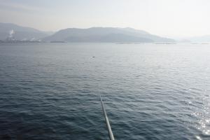 土曜日の釣果