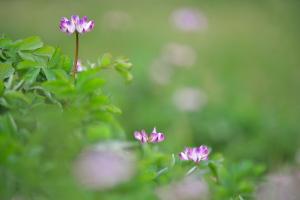 奥畑と花みどり公園へ
