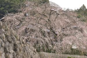 奥畑と花みどり公園へ(昨日)