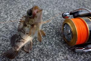 昨日は釣り