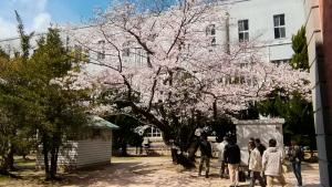 桜と平和公園と