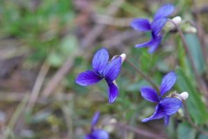 奥畑と花みどりの花々