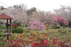 棲眞寺の花々