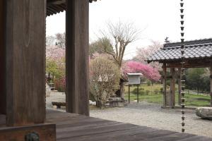 続・棲眞寺の花々
