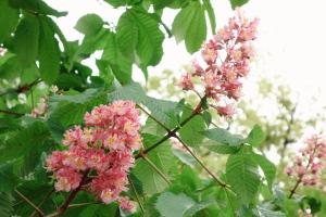 百日紅と花水木