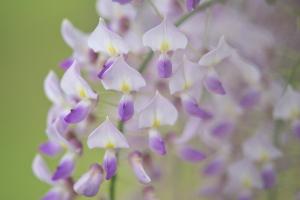 平成最後の花撮り