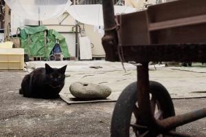 猫と平和大通り