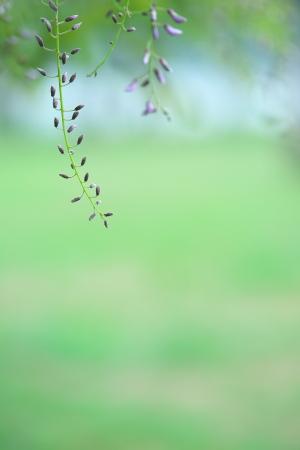 FF初日と平成の花々