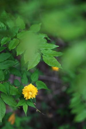 野呂山の花々