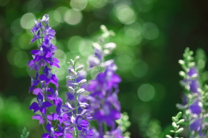 植物公園の花マクロ