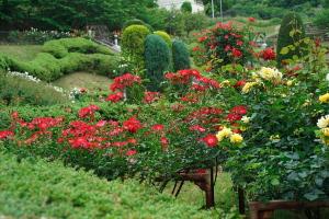 牛田のバラと豊平のフジ