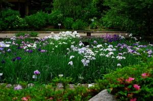 昨日の植物公園