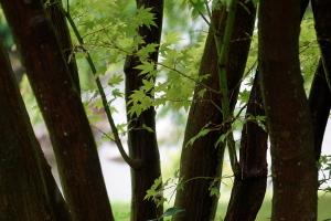 続・雨の三景園
