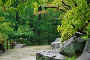 雨の三景園-2