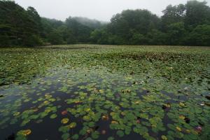 極楽寺の蛇の池へ