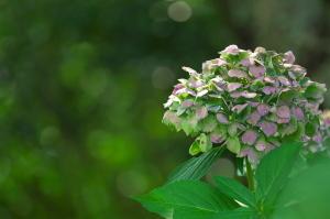 棲眞寺の花