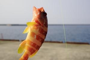 夏休みの釣果