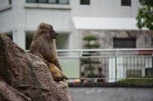 安佐動物公園へ