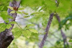 おおの自然観察の森-2