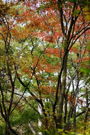 昨日のおおの自然観察の森
