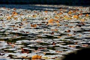 野呂山の氷池
