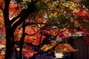 秋の吉水園一般公開