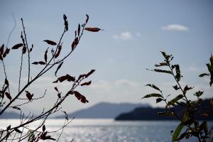 島のスナップ
