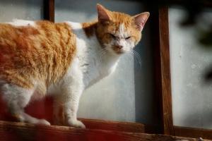 愛媛県・岡村島の猫