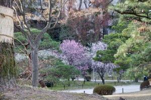 今日の縮景園・梅園