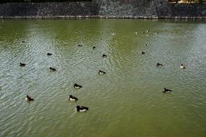 昨日の広島城跡