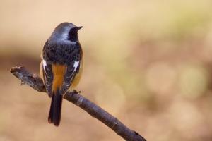 続・島の鳥たち