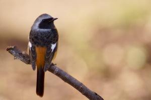 ノートリの鳥写真