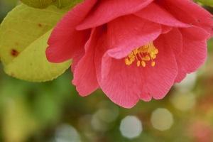 音戸の花々