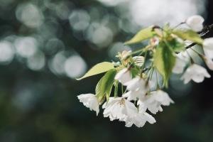 音戸の花々-2