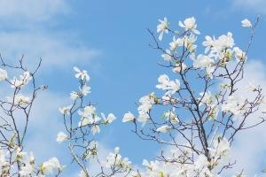 音戸の花々-3