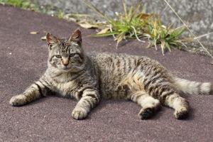 音戸の野良猫