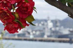 花と護衛艦