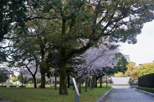 広島平和公園の桜