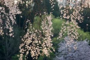 更けゆく春