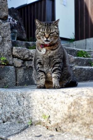 尾道で出会った猫たち