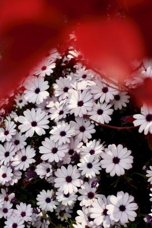 外出自粛の花Photo