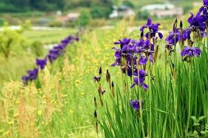 豊平の花と海景色