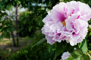 5月の花々