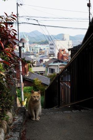 尾道の猫・総集編